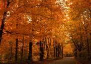 Orange-skov