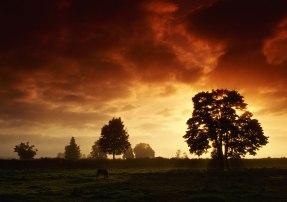 Sol-over-træer